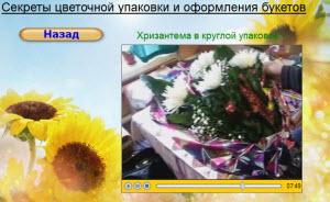 хризантема в упаковке веером