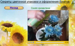 синяя хризантема синяя цветочная краска