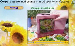 орхидеи в коробочках