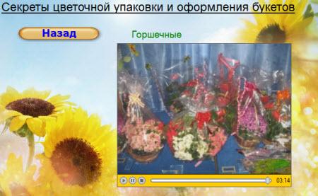 горшечные цветы и растения