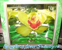 орхидея в подарочной коробочке